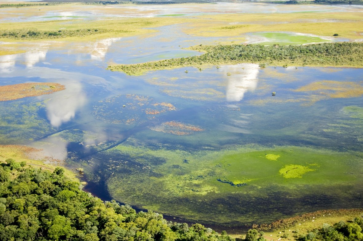 "Bioma Pantanal é contemplado no edital ""Apoio a Projetos"". Foto Haroldo Palo Junior"