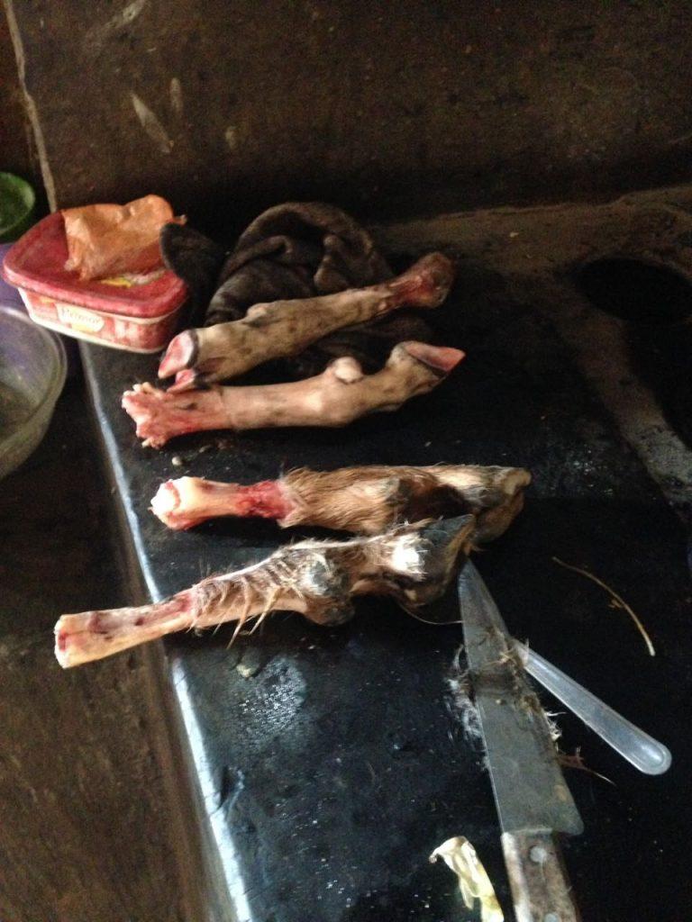 Patas de carneiro oferecidas como iguaria em agradecimento ao trabalho da equipe. Foto Gustavo Soncini